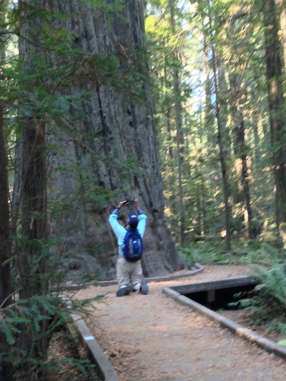 Redwoods 2017 10 08 5 Of 287