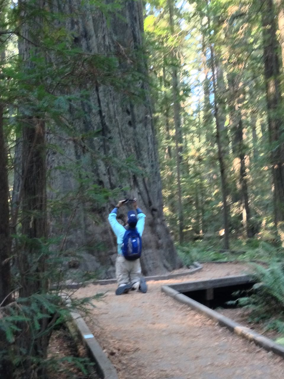Redwoods 2017 10 08 5 Of 287