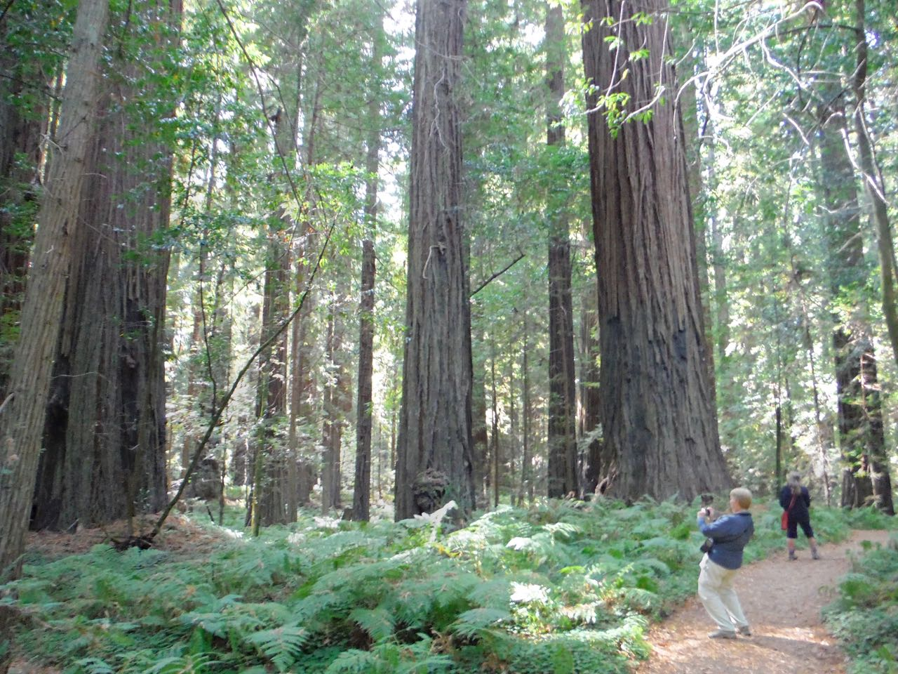 Redwoods 2017 10 08 50 Of 287