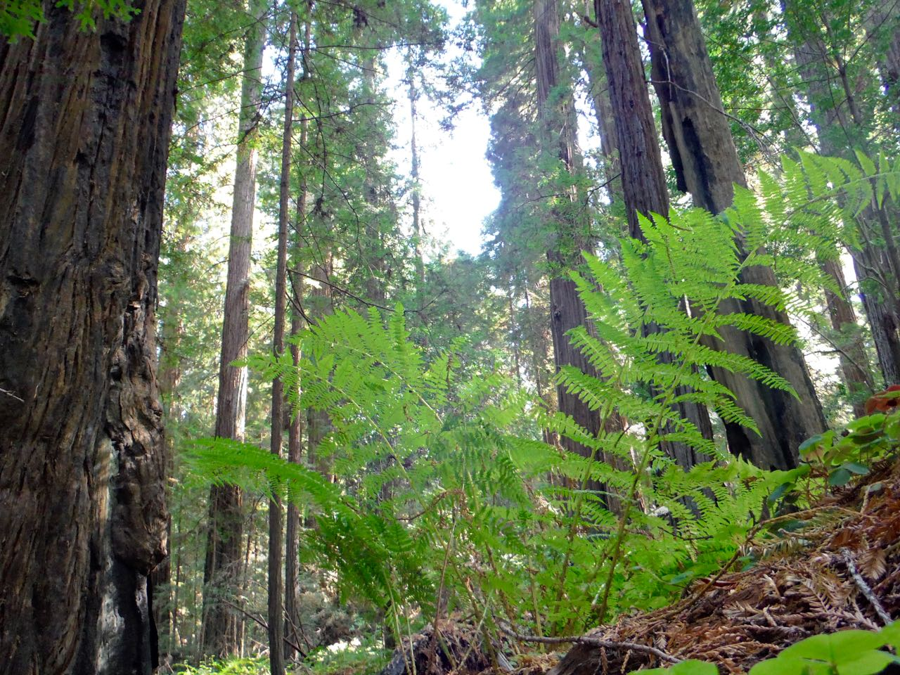 Redwoods 2017 10 08 52 Of 287