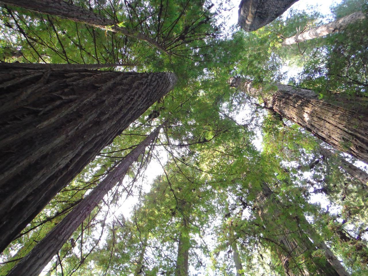 Redwoods 2017 10 08 53 Of 287