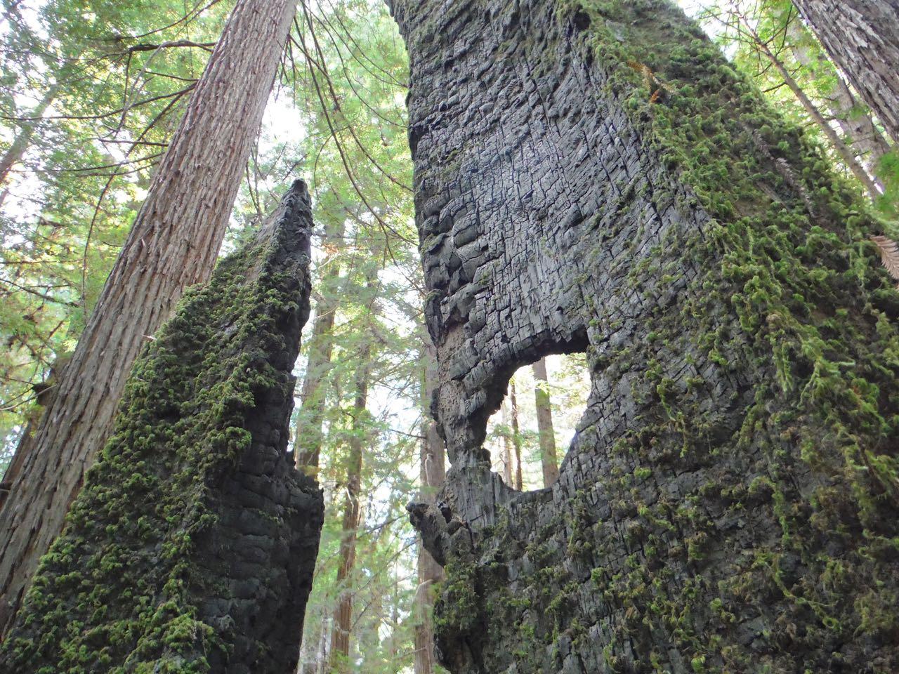 Redwoods 2017 10 08 54 Of 287