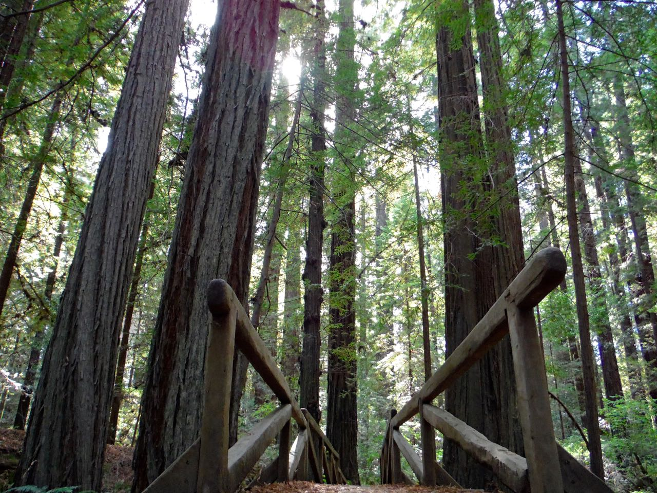 Redwoods 2017 10 08 55 Of 287