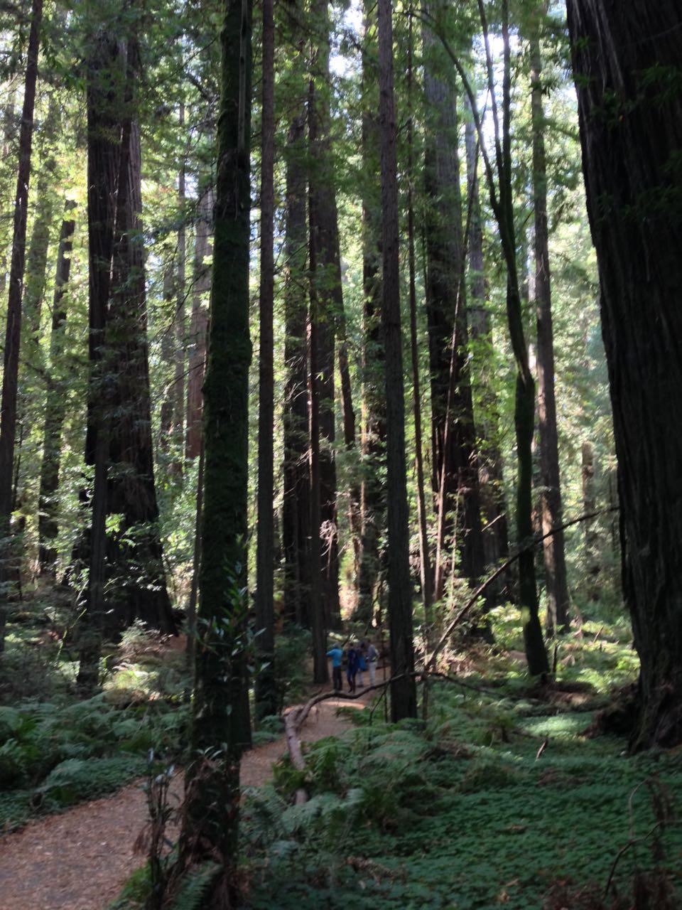 Redwoods 2017 10 08 56 Of 287