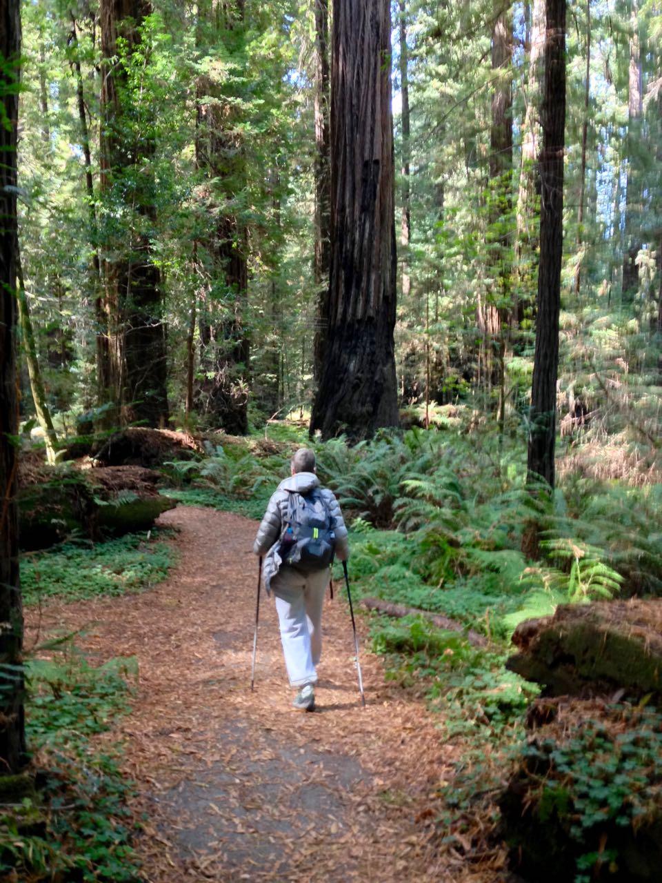 Redwoods 2017 10 08 58 Of 287