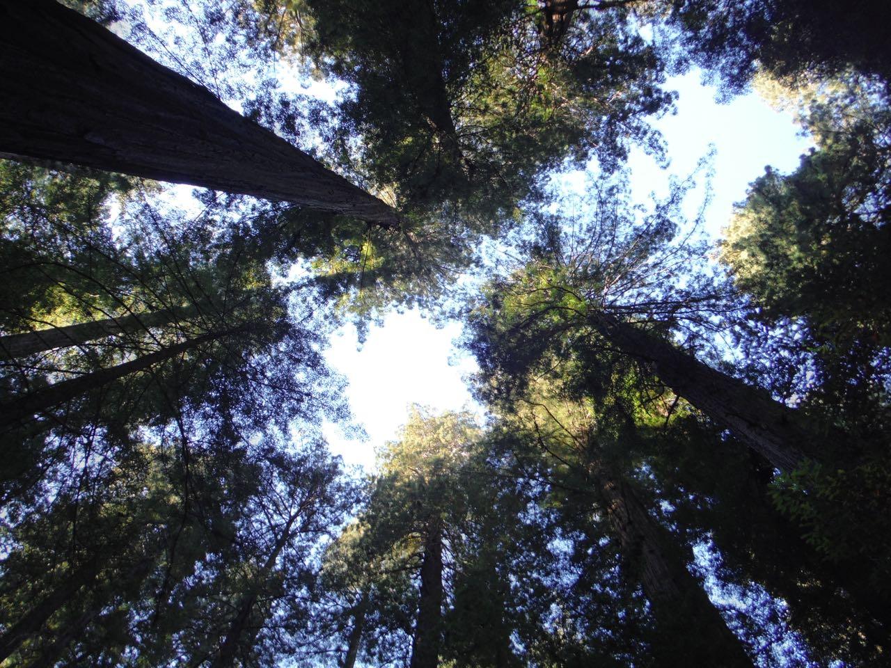 Redwoods 2017 10 08 6 Of 287