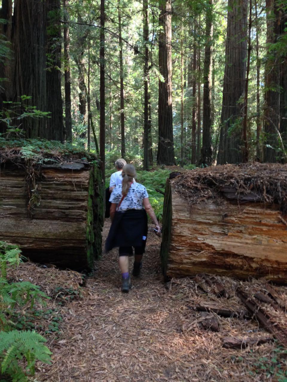 Redwoods 2017 10 08 60 Of 287
