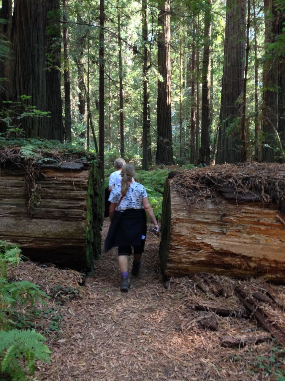 Redwoods 2017 10 08 60 Of 287