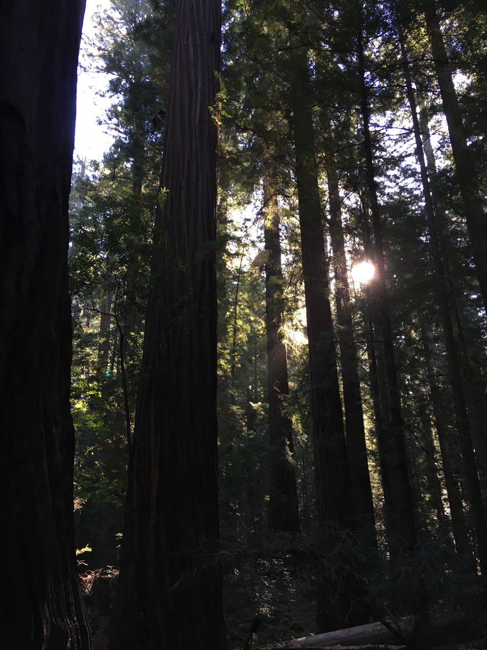 Redwoods 2017 10 08 61 Of 287