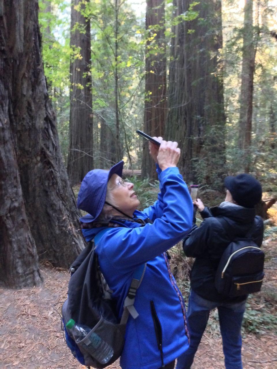 Redwoods 2017 10 08 7 Of 287