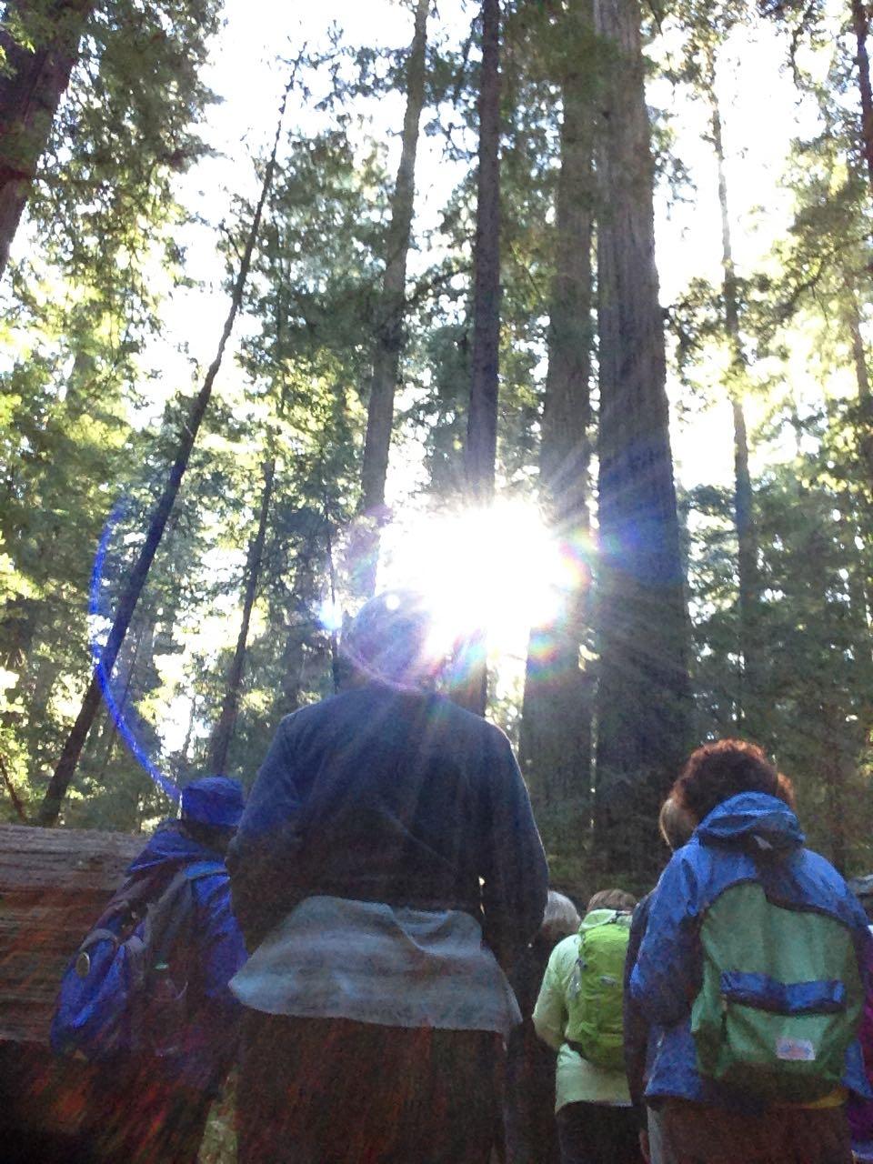 Redwoods 2017 10 08 8 Of 287