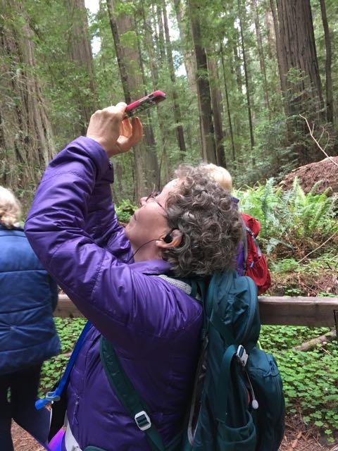 2018 05 20 Redwoods 11