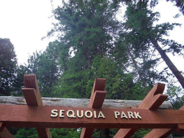 2018 05 20 Redwoods 110