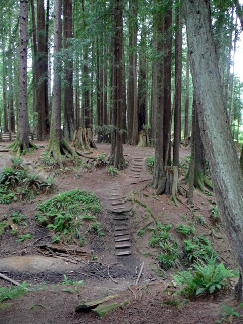 2018 05 20 Redwoods 111