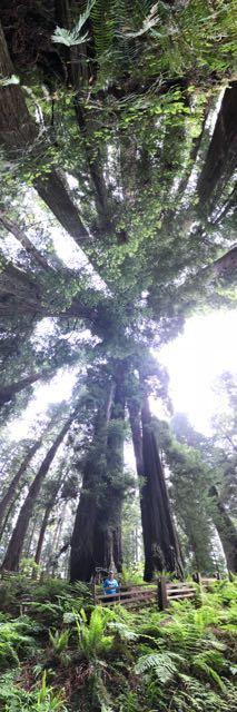 2018 05 20 Redwoods 115