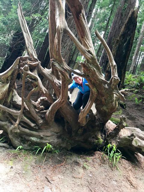 2018 05 20 Redwoods 116