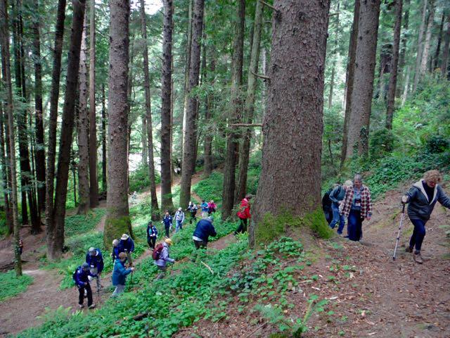 2018 05 20 Redwoods 119