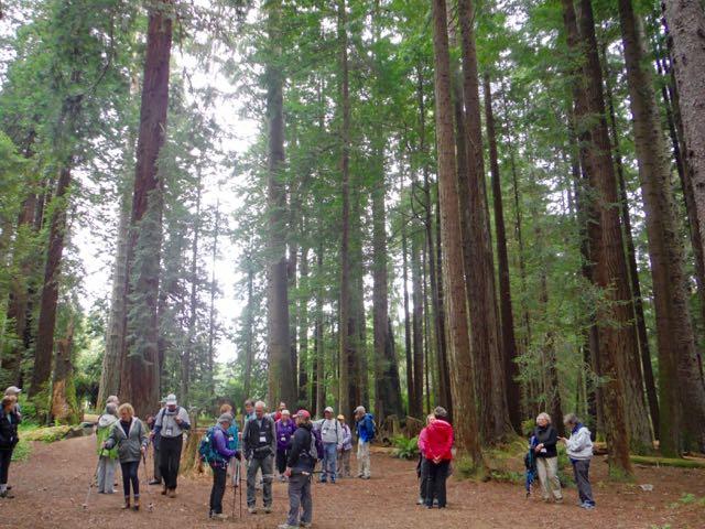 2018 05 20 Redwoods 120