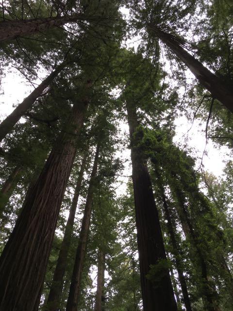 2018 05 20 Redwoods 14