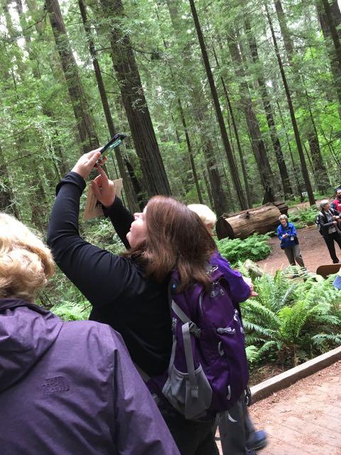 2018 05 20 Redwoods 15