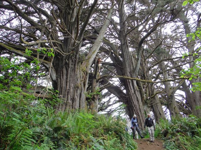 2018 05 20 Redwoods 179