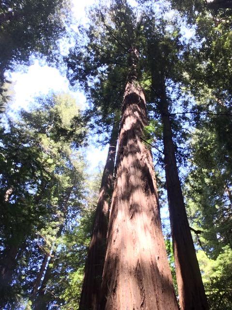 2018 05 20 Redwoods 18