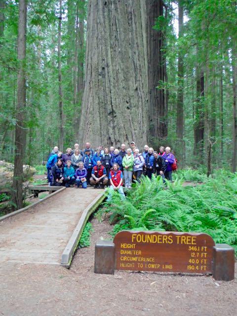 2018 05 20 Redwoods 2