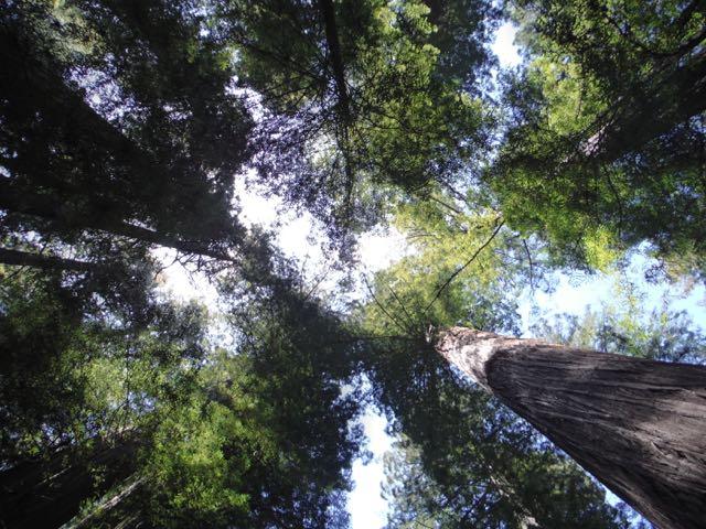 2018 05 20 Redwoods 20
