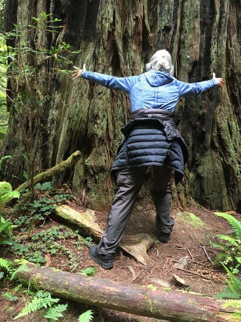 2018 05 20 Redwoods 211