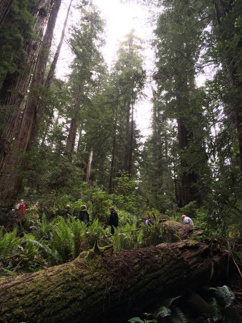 2018 05 20 Redwoods 213