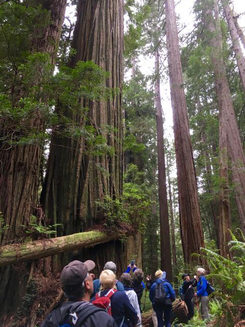2018 05 20 Redwoods 214