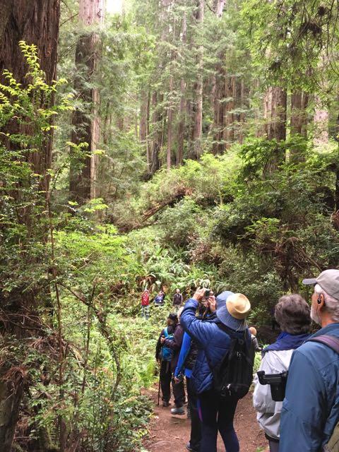 2018 05 20 Redwoods 215