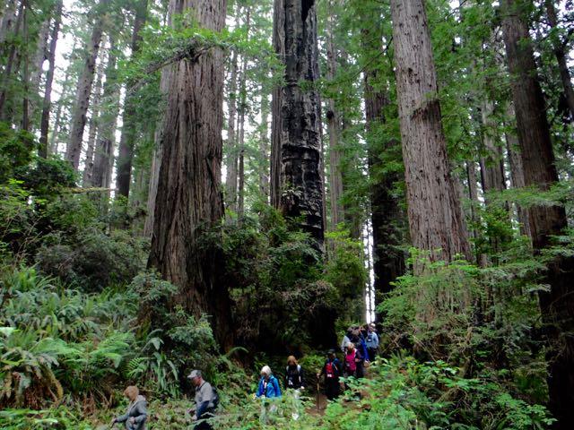 2018 05 20 Redwoods 216
