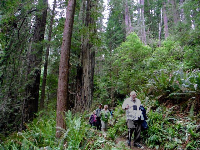 2018 05 20 Redwoods 217