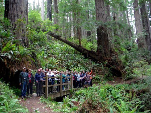 2018 05 20 Redwoods 218