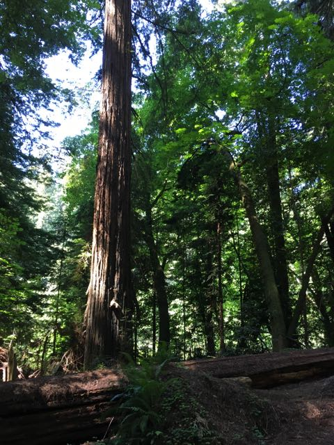 2018 05 20 Redwoods 22