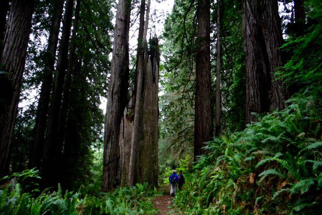 2018 05 20 Redwoods 221