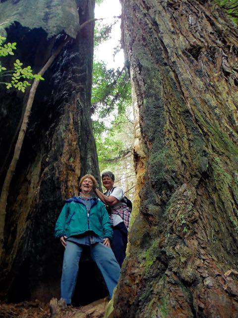 2018 05 20 Redwoods 223