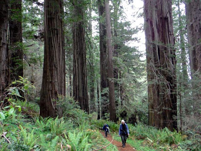 2018 05 20 Redwoods 224