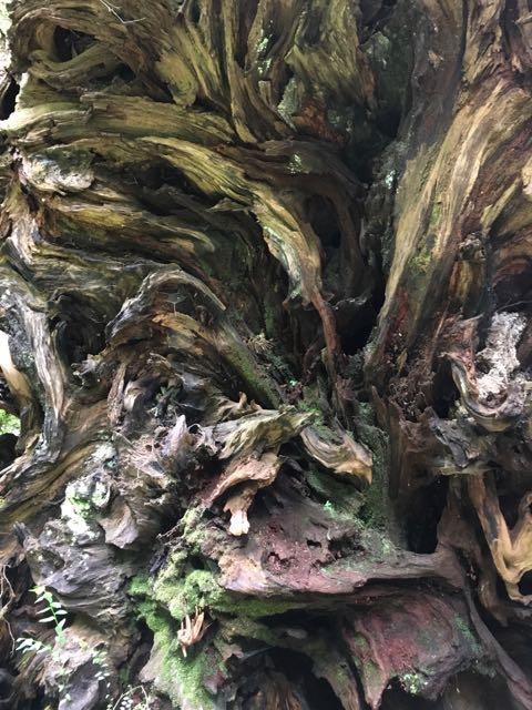 2018 05 20 Redwoods 225
