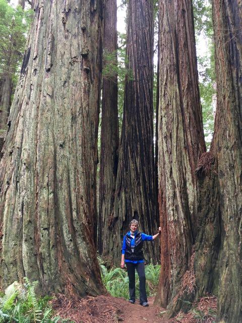 2018 05 20 Redwoods 229