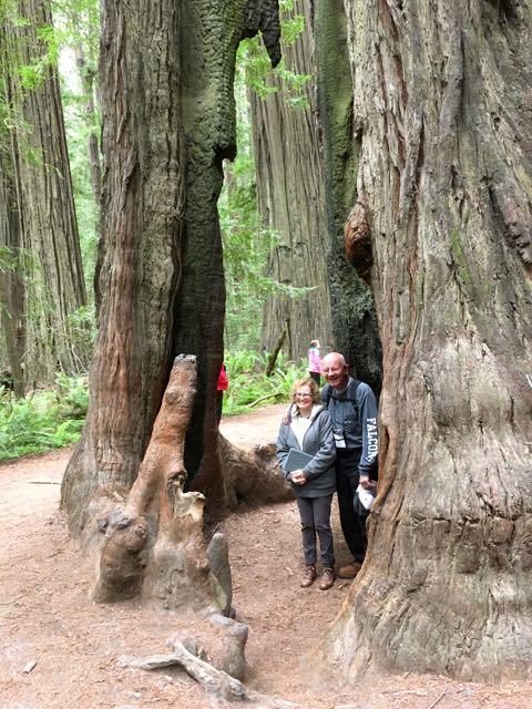 2018 05 20 Redwoods 23