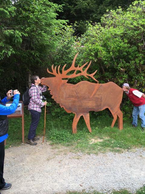 2018 05 20 Redwoods 233