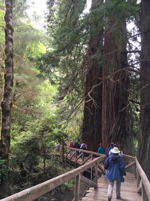 2018 05 20 Redwoods 235