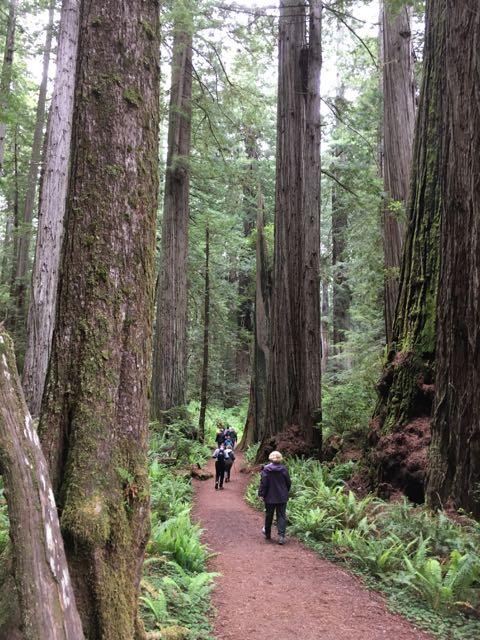 2018 05 20 Redwoods 237