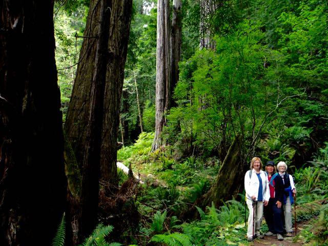 2018 05 20 Redwoods 238