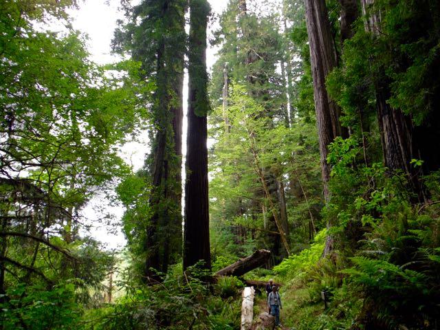 2018 05 20 Redwoods 240