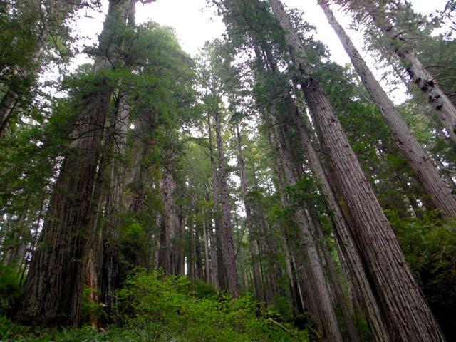 2018 05 20 Redwoods 244