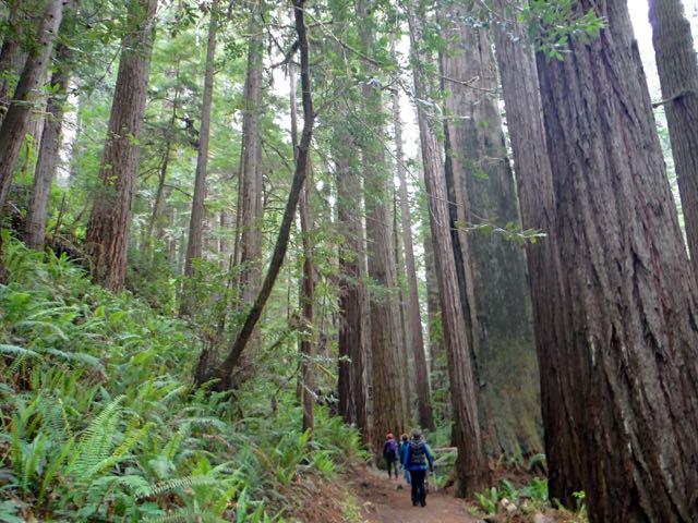 2018 05 20 Redwoods 248
