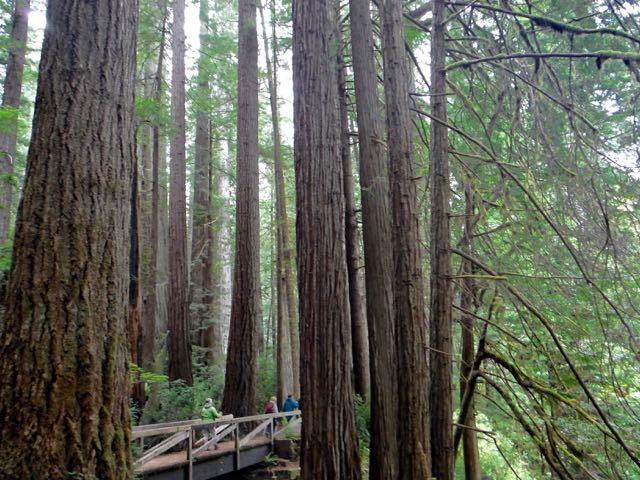 2018 05 20 Redwoods 249